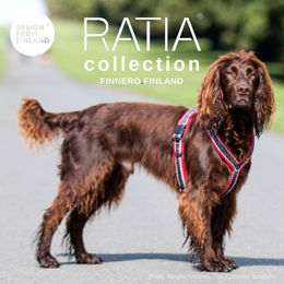 Woodylla on punainen RATIA 8 shape valjas 45 cm kuva: Megan Williams - The Cotswold Spaniels blog